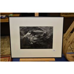 Framed black and white photograph of a dolphin