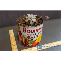 3Lb Squirrel Peanut Butter Tin w/ Succulent Plant