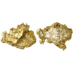 Large gold-in-quartz specimen, 323.2 grams, from the Sixteen to One Mine in Alleghany, California.