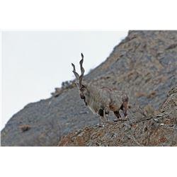 Tajikistan Bukhara Markhor Community-Based Conservation Hunting Experience