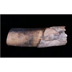Ancient Petrified Wooly Mammoth Tusk
