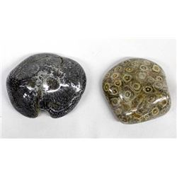 2 Pieces of Fossilized Coral