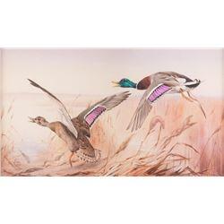 Edward Detmold, watercolor