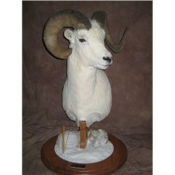 $750 TAXIDERMYCREDIT