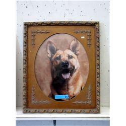 Large Framed Photo of a German Shepard Dog
