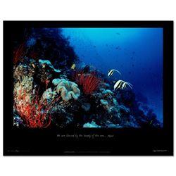 Undersea Garden by Wyland