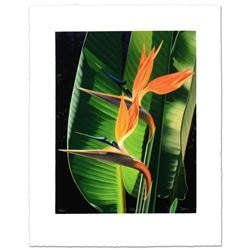 Bird Of Paradise by Davis, Brian
