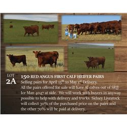 150 RED ANGUS FIRST CALF HEIFER PAIRS