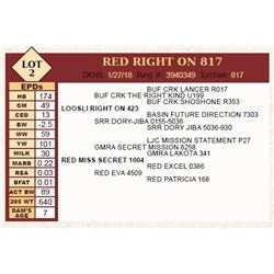 Lot - 2 - RED RIGHT ON 817