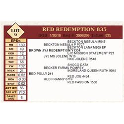 Lot - 6 - RED REDEMPTION 835