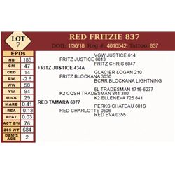 Lot - 7 - RED FRITZIE 837