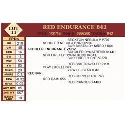 Lot - 11 - RED ENDURANCE 842