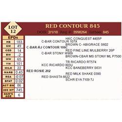 Lot - 12 - RED CONTOUR 845