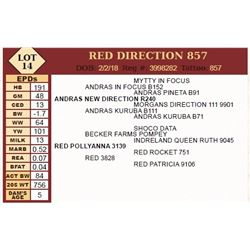 Lot - 14 - RED DIRECTION 857