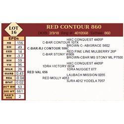 Lot - 16 - RED CONTOUR 860