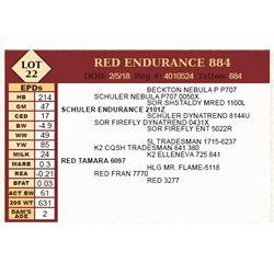 Lot - 22 - RED ENDURANCE 884