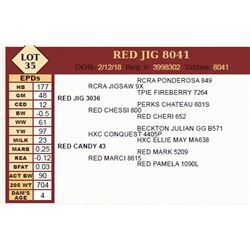 Lot - 35 - RED JIG 8041
