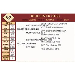 Lot - 58 - RED LINER 8133