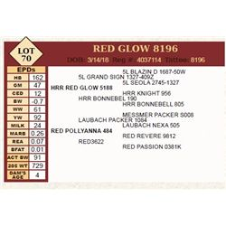 Lot - 70 - RED GLOW 8196