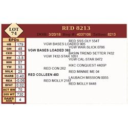 Lot - 74 - RED 8213