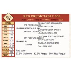 Lot - 89 - RED PREDICTABLE 809
