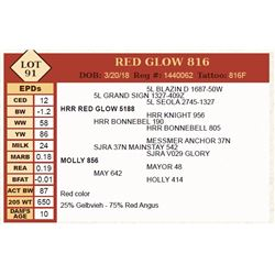 Lot - 91 - RED GLOW 816