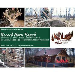 Whitetail Hunt In Saskatchewan
