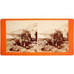 Mono Lake Baskets Stereoview  (91253)
