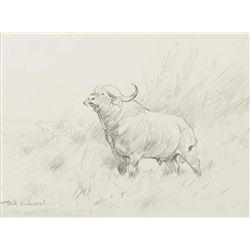Wilhelm Kuhnert-Cape Buffalo
