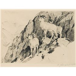 Carl Rungius-Dall Sheep