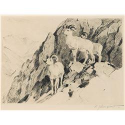 Carl Rungius-Dall Sheep