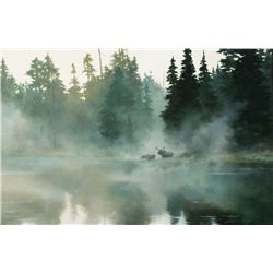 Lanford Monroe-Moose in Mist