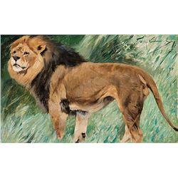 Wilhelm Kuhnert-Lion