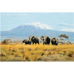 John Seerey-Lester-Elephants