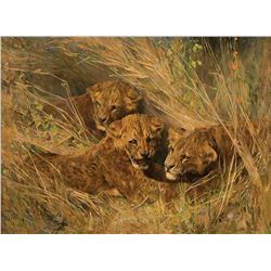Arthur Wardle-Lion Cubs