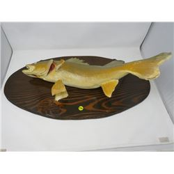 "MOUNTED PICKEREL *27' X 14"" OVAL*"