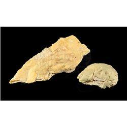 Lot # 726: 2 Krayt Dragon Bone Pieces