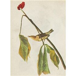c1946 Audubon Print, #19 Louisiana Water Thrush