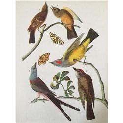 c1946 Audubon Print, #359 Three Tyrant Flycatchers
