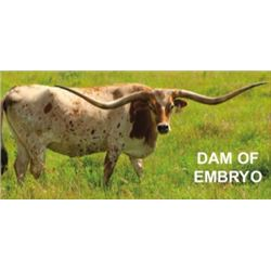 COWBOY TUFF CHEX X TEMPTING ROSE EMBRYO