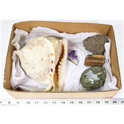 BOX W/LARGE CONCH SHELL, CATS EYE STONE,