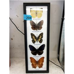 5 Framed Butterflies