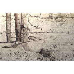 "Brown, Bernie framed print, ""Temporary Shelter""-jack rabbit in snow-pencil,216/265, 12"" h x 18""w"