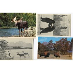 LOT OF 15 POSTCARDS (ASSORTED WILDLIFE THEMES)