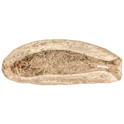 Prehistoric Fish Fossil within a Stone Matrix, 4 Inches long