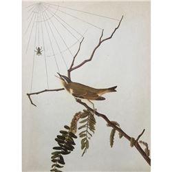 c1946 Audubon Print, #150 Red-Eyed Vireo