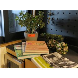 Faux Succulent Plant, Decorative Rope Balls, Ossipof Architecture Book, Cookbooks