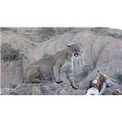 Arizona Commission Mountain Lion Hunt