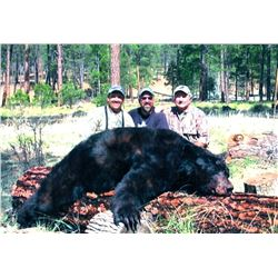 White Mountain Apache Black Bear Hunt for Wounded Warrior