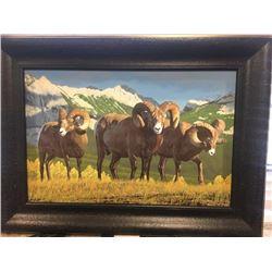 Giclee Montana Rams